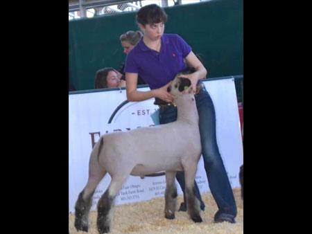 2015-sheep-champs