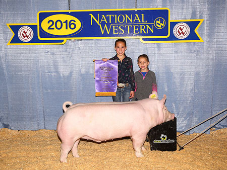 2016 Show Pig Champions