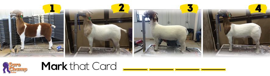 breeding doe judging class header image