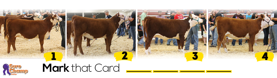 performance hereford heifer judging class header image