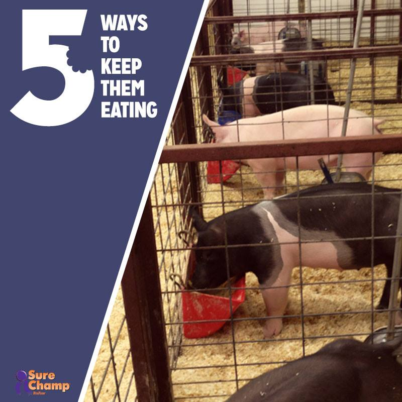 5 Tips to Keep Your Livestock Eating