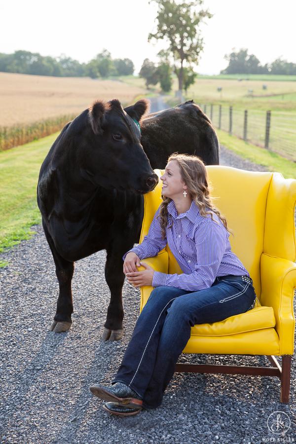 Sure Champ Senior Photos: Show Heifer