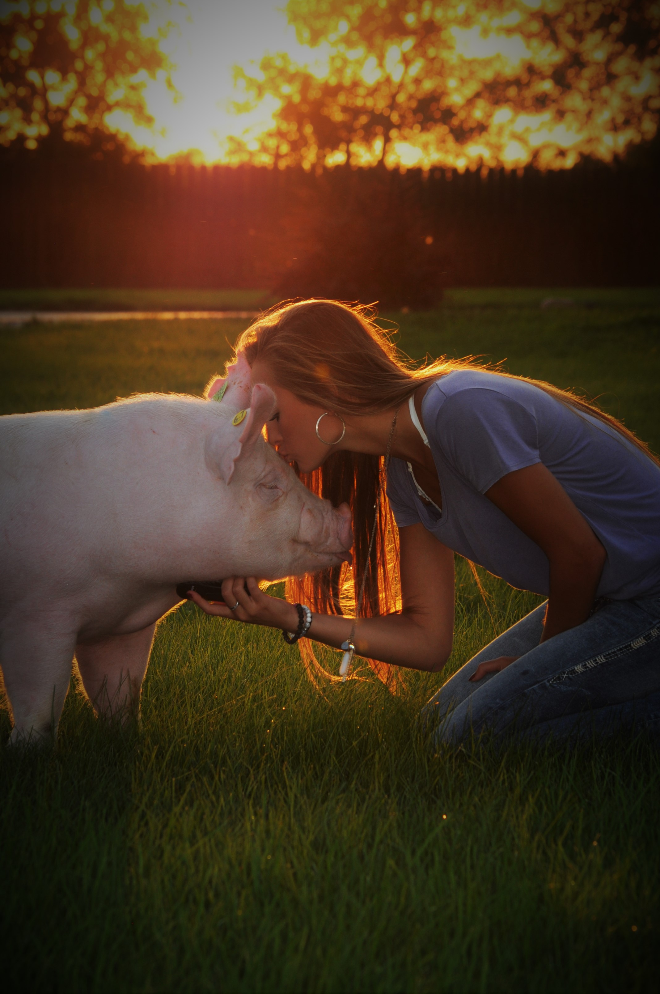 Sure Champ Senior Photos: Show Pig