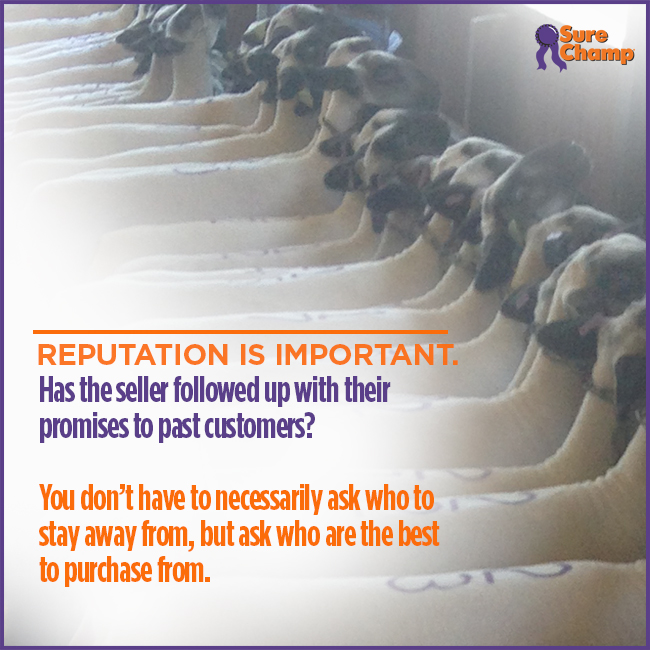 Reputation is Important when buying livestock.