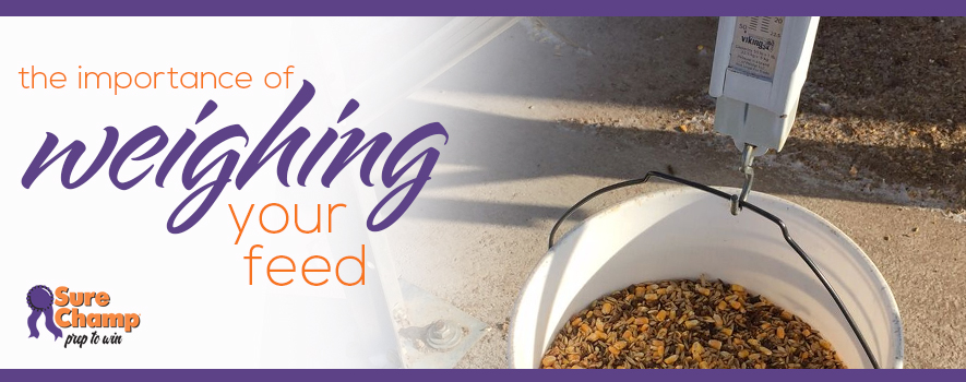 The Importance of Weighing Show Feed