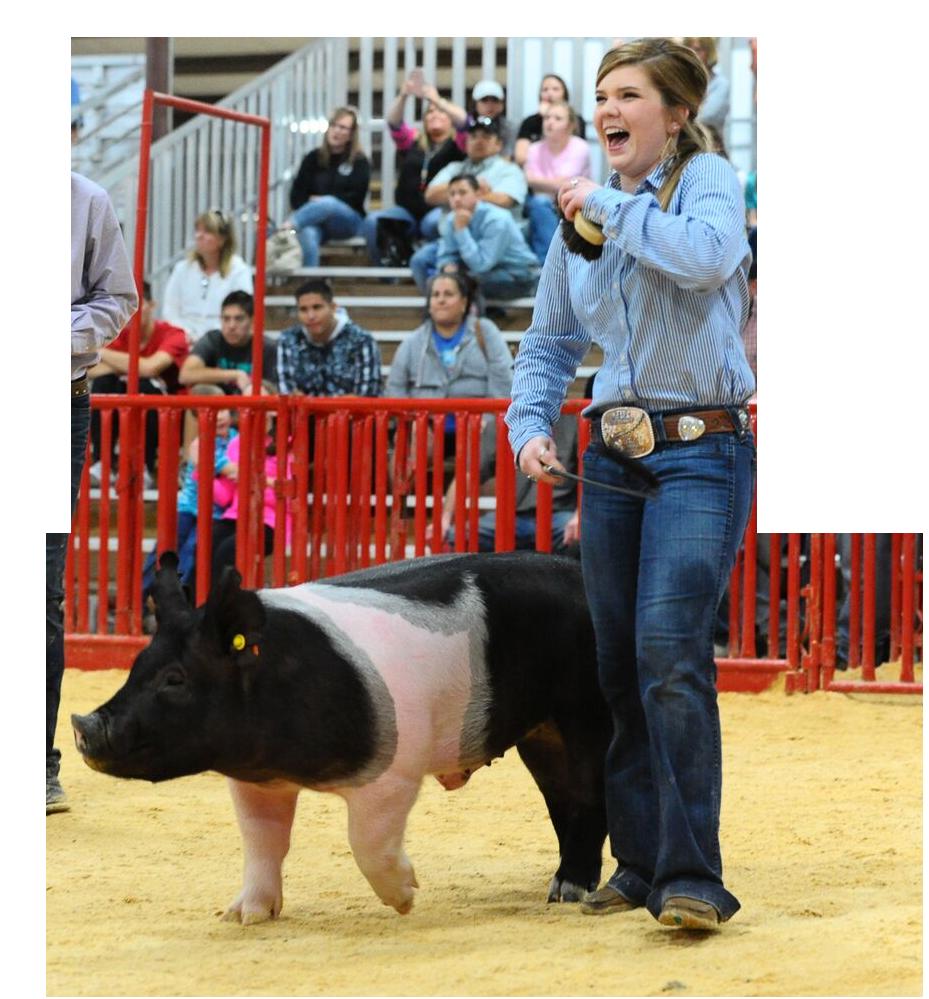 Show Pig
